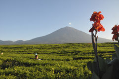 Vulcão de Kerinci Imagens de Stock Royalty Free