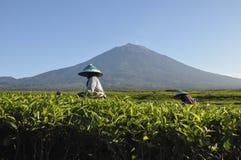 Vulcão de Kerinci Imagens de Stock
