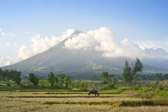 Vulcão de Mayon foto de stock royalty free