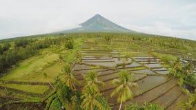 Vulcão de Mayon perto da cidade de Legazpi em Filipinas Vista aérea sobre campos do arroz O vulcão de Mayon é um vulcão ativo e filme
