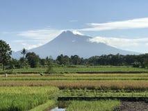 Vulcão de Merapi Imagens de Stock