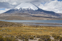 Vulcão de Parinacota Fotos de Stock Royalty Free