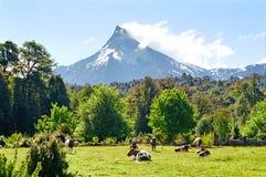 Vulcão de Puntiagudo, o Chile fotografia de stock