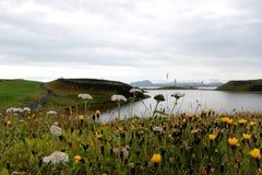 Vulcão inoperante na área de Myvatn com flores Imagens de Stock