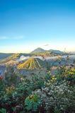 Vulcão no nascer do sol, East Java de Bromo, Indonésia com a flor como o primeiro plano Foto de Stock