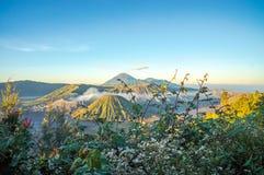 Vulcão no nascer do sol, East Java de Bromo, Indonésia com a flor como o primeiro plano Fotografia de Stock