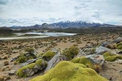 Vulcão tampado neve de Parinacota Fotografia de Stock Royalty Free