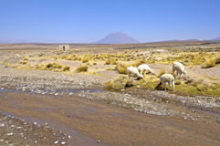 The vulcan El Misti, Peru Royalty Free Stock Photo