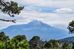 Vulcan Izztaccihuatl seen from Mt. Tlaloc through a pine forest stock photography