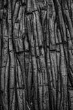 Vulcanic struktura Obraz Royalty Free
