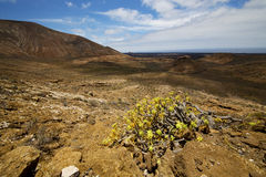 Vulcanic timanfaya   spain plant flower Stock Image