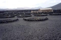 Volcanic wineyard Stock Photos