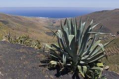 vulcanico fotografie stock