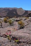 Vulcano del Piton de la Fournaise Immagini Stock