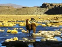 Vulcano di Uturunku, Altiplano, Bolivia. Immagine Stock