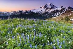Vulcano e fiori blu ad alba Immagine Stock