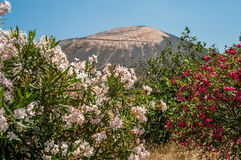 Vulcano Island. With Fowers in the Mediterranean Sea Stock Images