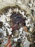 Vulcanoes de boue Images stock