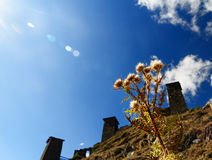 Vulgare de Cirsium pendant l'automne Image stock