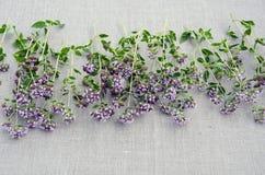 Vulgare dell'origano dell'erba dell'origano sul panno di tela Fotografie Stock