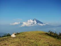Vulkaan en de hond Stock Foto's