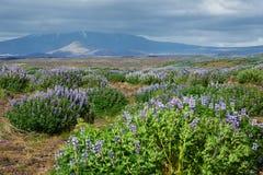 Vulkaan in IJsland Royalty-vrije Stock Foto