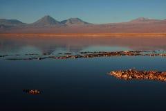 Volcano licancabur in a chilean lagoon Stock Foto's
