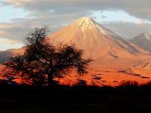 Vulkan- och trädkontur Royaltyfria Bilder