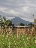 Vulkan-Ruanda-Garten Lizenzfreie Stockbilder
