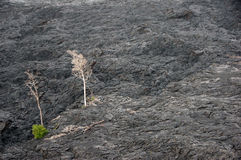 Vulkan-Tätigkeit, Hawaii, USA Stockfotos
