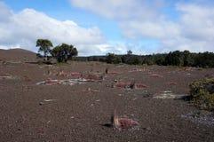 Vulkanaktivitet, Hawaii, USA Fotografering för Bildbyråer