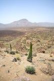 Vulkanisch land Stock Afbeelding