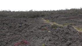 Vulkanisch landschap Hawaï stock videobeelden