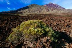 Vulkanisch lavalandschap Royalty-vrije Stock Afbeelding