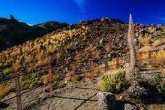 Vulkanisch lavalandschap op Teide Stock Afbeelding