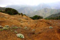 Vulkanische Blumen Lizenzfreies Stockbild