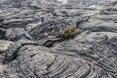 Vulkanische Felsformationen Galapagos-Inseln mit Kakteen Lizenzfreie Stockfotografie