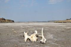 Vulkanische Landschaften am See Magadi, Kenia stockbilder