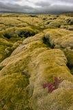 Vulkanische lava, IJsland Royalty-vrije Stock Afbeeldingen