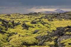 Vulkanische Lavaforderung durchgesetzt mit Moos Stockbild