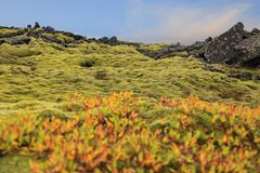 Vulkanische Lavasteine bedeckt mit Moos, Island Stockfoto