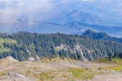 vulkanische steen behandelde aarde met weelderige bossen op achtergrond royalty-vrije stock afbeelding