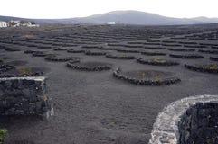 Vulkanische wijngaard Stock Afbeeldingen