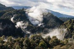 Vulkanisk ånga i den termiska dalen i Rotorua Arkivfoton