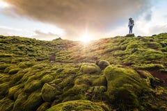 Vulkanisk mossa Island royaltyfria bilder