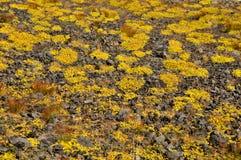 Vulkanisk sten Royaltyfria Bilder