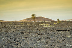 Vulkaniska fält i Lanzarote i Spanien Royaltyfri Foto