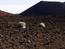 Vulkaniska växter Arkivfoto