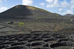 vulkaniska vingårdar Arkivfoto