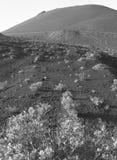 Vulkaniskt landskap i La Palma kanariefågelöar tenerife spain Arkivfoton